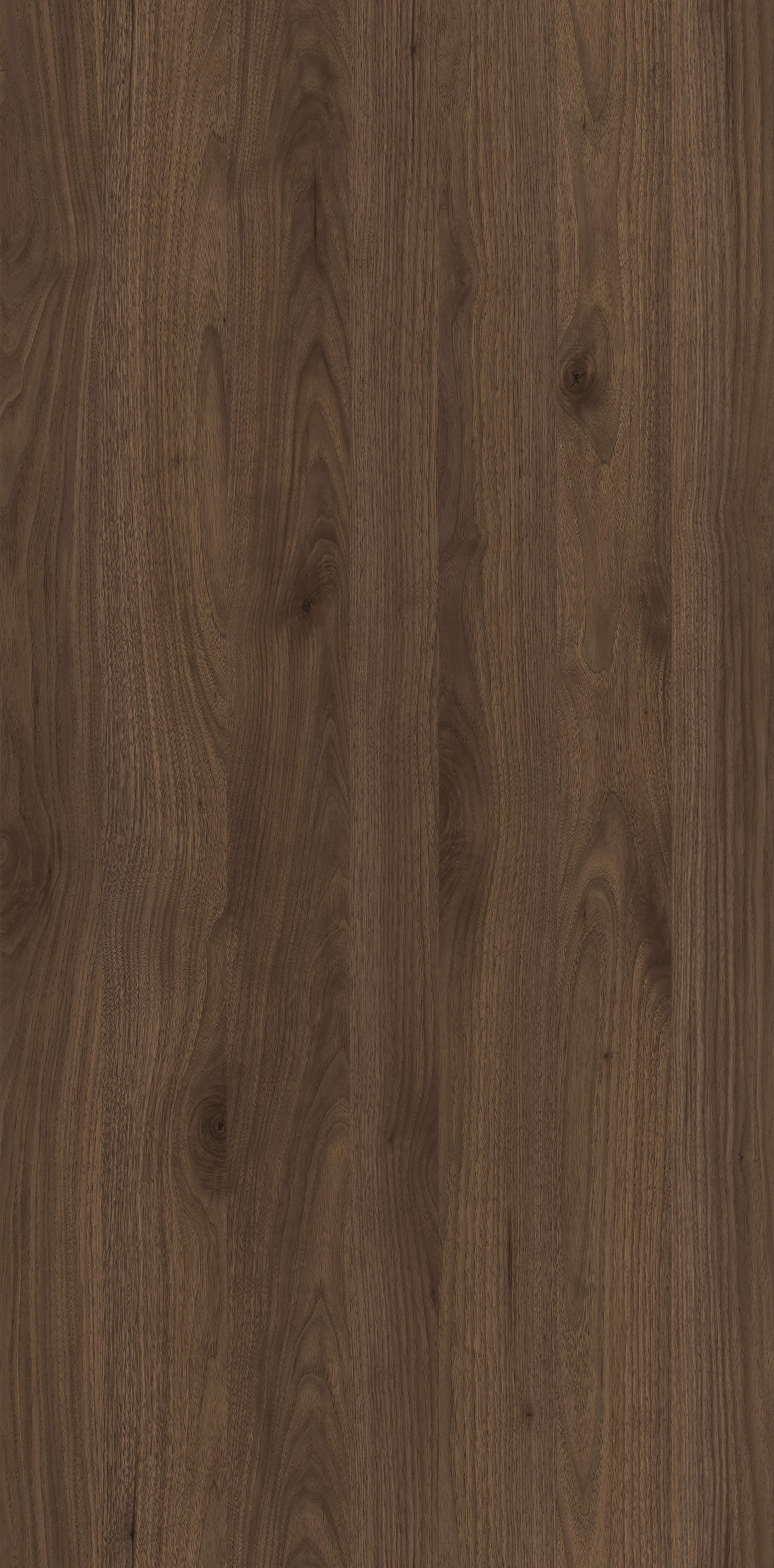 Orzech Okapi R30135 NW