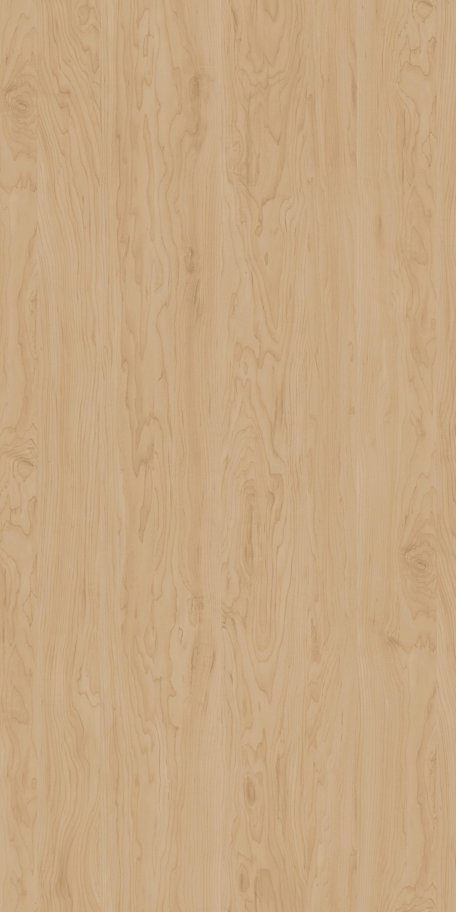 Brzoza Alaska R35017 MO